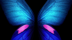 Samsung Galaxy Fold Live Wallpapers Blue Butterfly