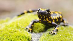 Salamander HD Wallpapers