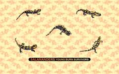 Salamanders Young Burn Survivors Salamanders Wallpapers