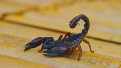 hd pics photos stunning attractive scorpion insects macro