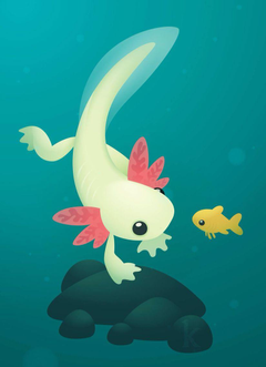 Axolotl by Karianne Hutchinson Illustration vector illustrator adobe