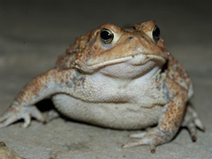 Toad Wallpapers and Backgrounds