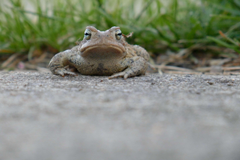 frog toad 4k wallpapers and backgrounds