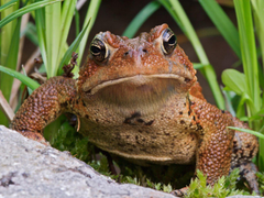 Toad HD Wallpapers