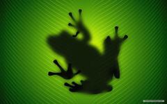 Frog Wallpaper