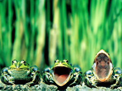 Happy Aquarium Community View topic