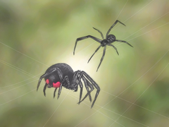 How to Identify and Treat Black Widow Spider Bites 10 Steps