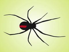 Black Widow Spider Vector Art Graphics