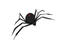 Ways to Draw a Spider