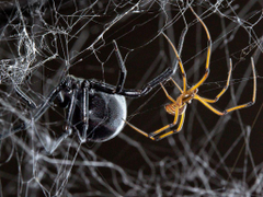 This is a blog about spiders