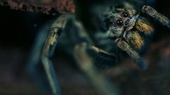 K Ultra HD Tarantula Wallpapers for Pics