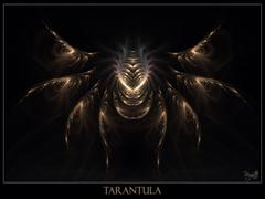 Tarantula Wallpapers