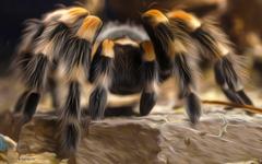 Tarantula HD Wallpapers