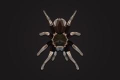 A gift for r Tarantulas