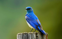 Latest Collection of 25 Bluebird Pictures