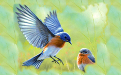 Beautiful Bluebird Pictures and Image