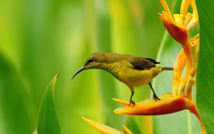 Spring Flowers And Birds Wallpaper Backgrounds 1 HD Wallpapers
