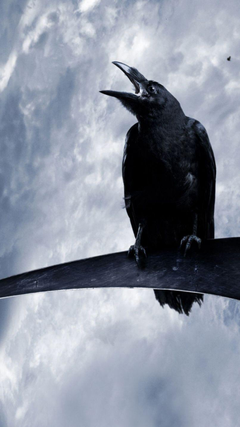crow wallpapers