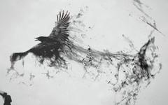 Crow Desktop Wallpapers