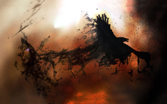 Crows flying wallpapers
