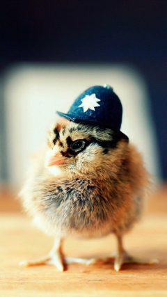 Police chick so cute Cute Animals iPhone Wallpapers