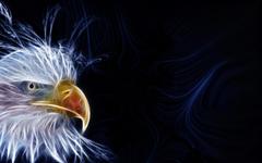 Eagle Desktop Wallpapers