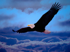 Animals For Eagles Logo Wallpapers Hd