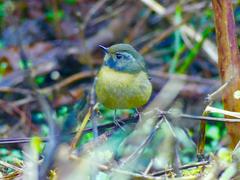 Budding Birdwatcher 2018