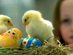 chicks wallpapers Gallery