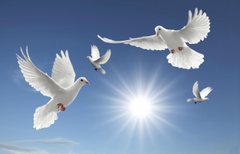 Dove Wallpapers Find best latest Dove Wallpapers in HD for your PC