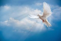 Animals Birds Flying Dove wallpapers
