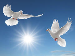 Peace Dove Wallpapers and Backgrounds Image