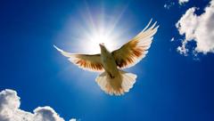 Hite Doves Flying HD Wallpaper Backgrounds Image