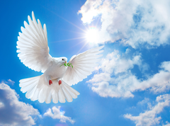 Peace Dove Wallpapers 3