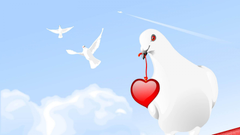 Pigeons Wallpapers 12