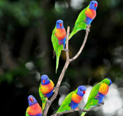 Colorful Parrot Birds Image Photos Wallpapers