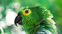 Parrot Wallpapers