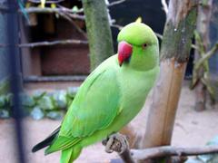 Green Parrots Wallpapers