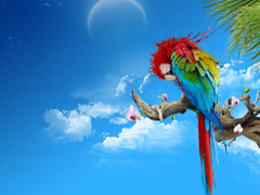 Parrots image Parrot HD wallpapers and backgrounds photos