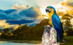 Macaw Parrot Wallpapers