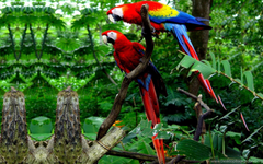 Macaw Parrot Bird Tropical