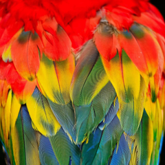Scarlet Macaw Wallpapers by S