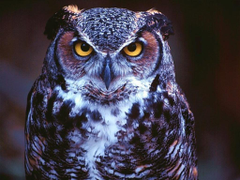 A selection of 10 Image of Owl in HD quality