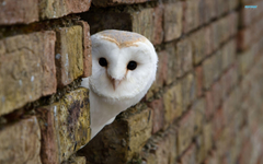 Interesting Owl Wallpapers Peeking Around Corner Building White