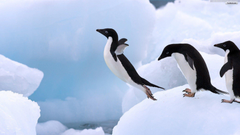 Penguin Wallpapers HD Pictures One HD Wallpapers Pictures