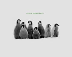 Penguin HD Wallpapers