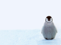 Penguin Wallpapers Group with 68 items