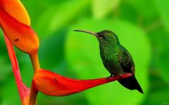 Latest Humming Bird HD Wallpapers