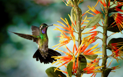 FunMozar Hummingbird