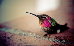 Image For Hummingbird Wallpapers For Walls